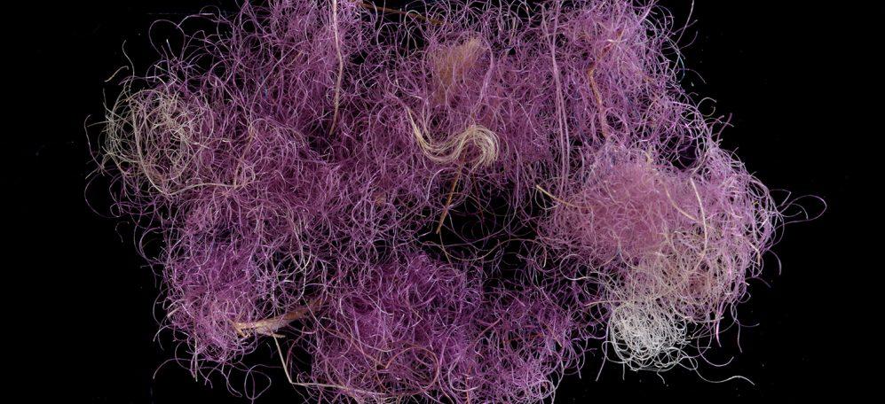 Fragment of the rare purple fabric. Photo_ Dafna Gazit, Israel Antiquities Authority